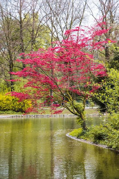 Albero di ciliegio piantato dal fiume scaricare foto gratis for Pianta di ciliegio