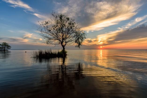 Albero di lamphu sull'acqua, provincia di phatthalung Foto Premium