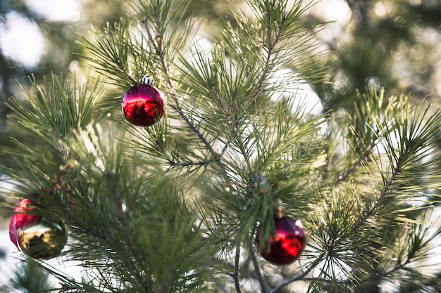 Immagini Natale Natura.Albero Di Natale In Natura Con Tre Palle Di Natale