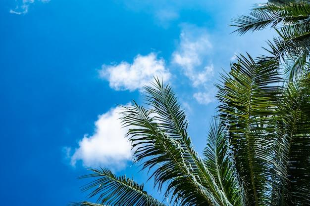 Albero di noci di cocco con il chiaro cielo nel concetto di vacanza estiva Foto Premium