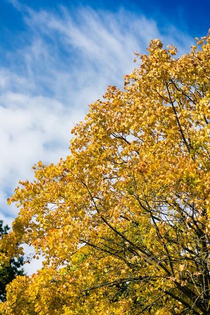 Albero in autunno o in autunno Foto Premium
