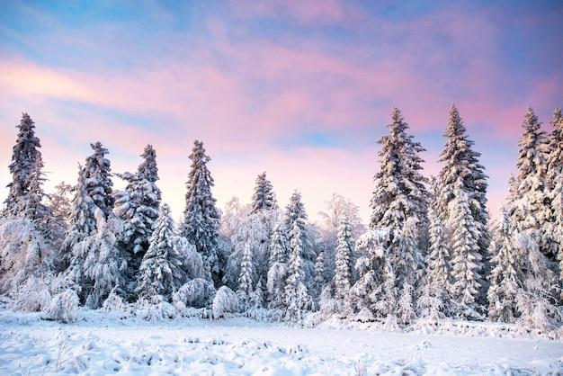 Albero innevato inverno magico Foto Premium