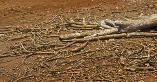 Albero morto, caldo Foto Gratuite