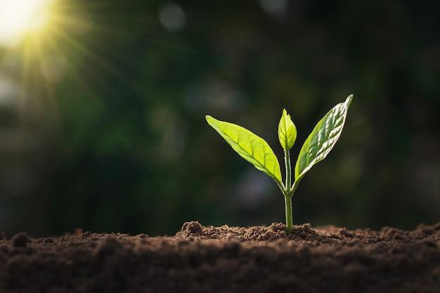 Albero piccolo in crescita in natura e luce solare Foto Premium