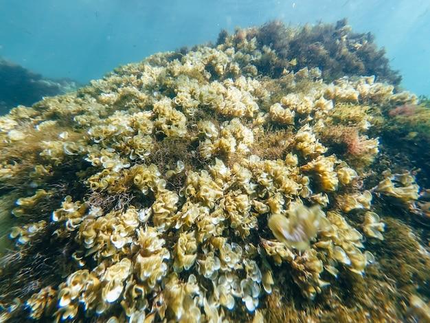Alghe sul fondo del mare Foto Premium