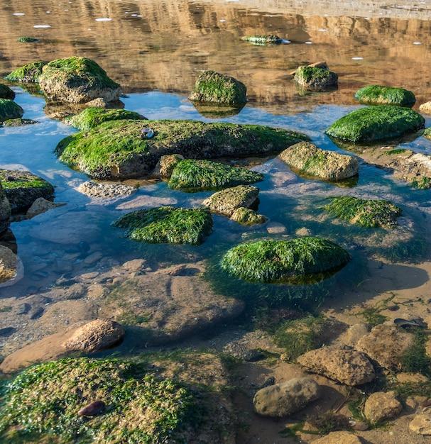 Alghe verdi sulle rocce sul bordo del mare Foto Premium