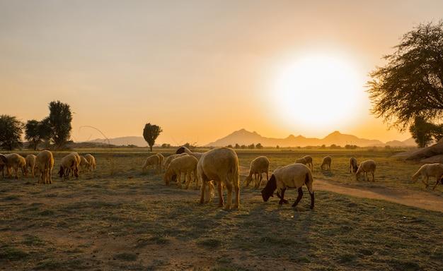 Allevamento rurale Foto Premium