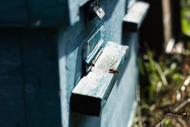 Alveari di legno dell'ape del primo piano all'azienda agricola Foto Gratuite