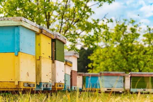 Alveari di legno variopinti nell'erba e api che portano polline per miele Foto Premium