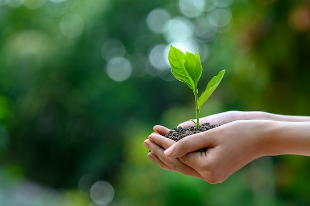 Ambiente earth day nelle mani di alberi che crescono piantine Foto Premium
