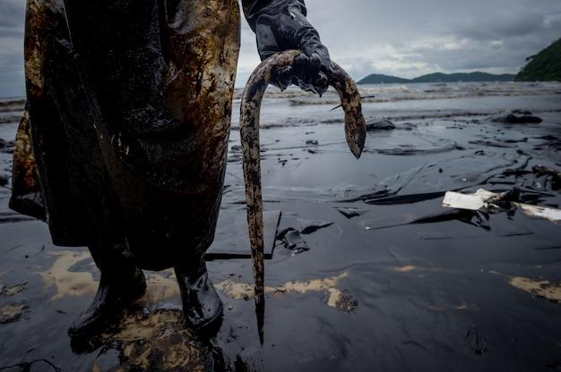 Anguilla uccisa dall'inquinamento da idrocarburi sulla spiaggia Foto Premium