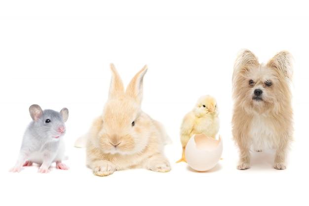 Animali su bianco isolato Foto Premium