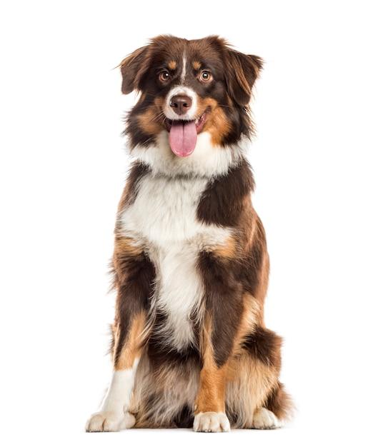 Ansimare cane di razza mista seduto di fronte alla telecamera Foto Premium