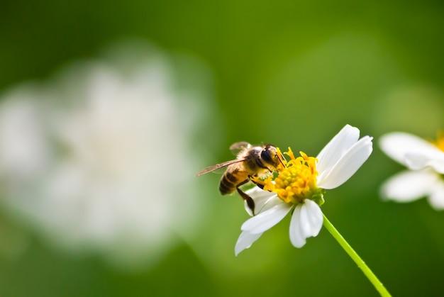 Antenna colore verde ape bianco Foto Gratuite