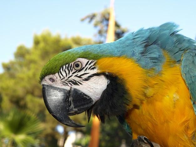 Ara Uccello Pappagallo Colorato Primavera Animale Disegno Di Legge