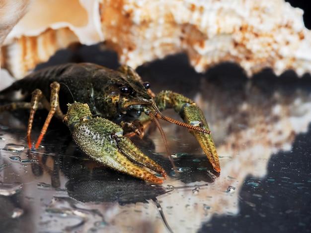 Aragosta in acqua Foto Premium