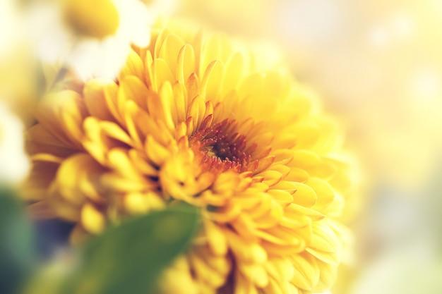 Arte astratto brillante stagione flora Foto Gratuite