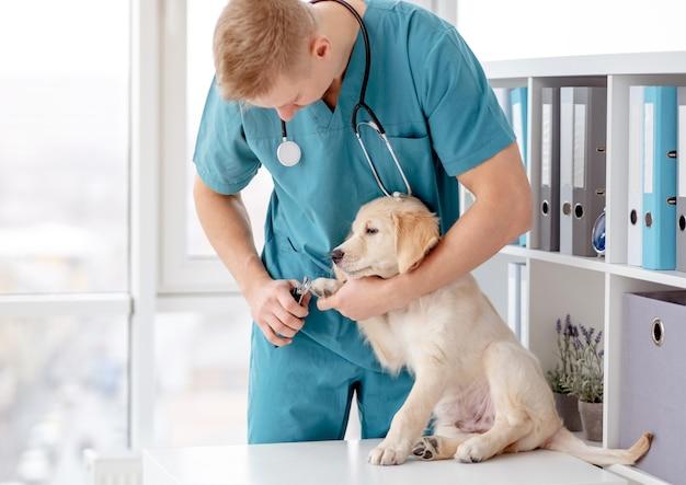 Artigli per cani da taglio veterinari Foto Premium