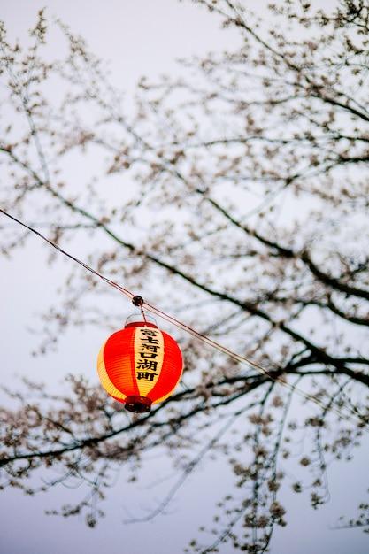 Asia lanterna japan sakura crepuscolo Foto Gratuite