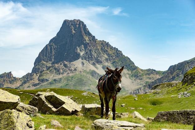 Asino con il pic du midi d'ossau nei pirenei francesi Foto Premium