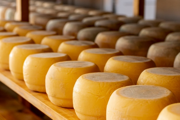 Assortimento di close-up di gustoso formaggio Foto Gratuite