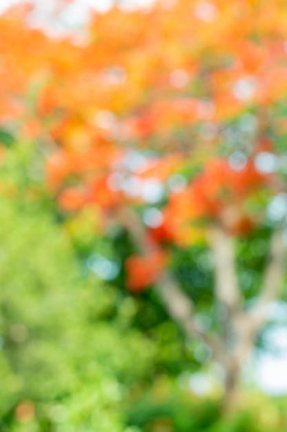 Astratto sfocato dell'albero, fiori rossi e arancioni. Foto Premium