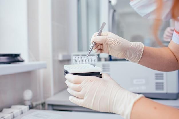 Attrezzature da laboratorio per prodotti chimici o biologici - le mani della donna in guanti di lattice bianco che tengono il blocco di provette con una pinzetta sotto un supporto Foto Premium
