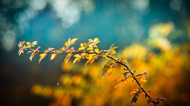 Autumn best landscape picture Foto Premium