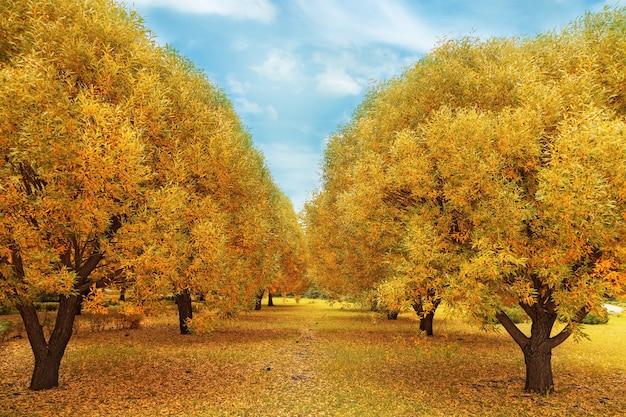 Autunno d'oro. paesaggio autunnale con salici. Foto Premium