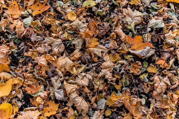 Autunno del contesto del fondo di struttura delle foglie della foresta Foto Premium