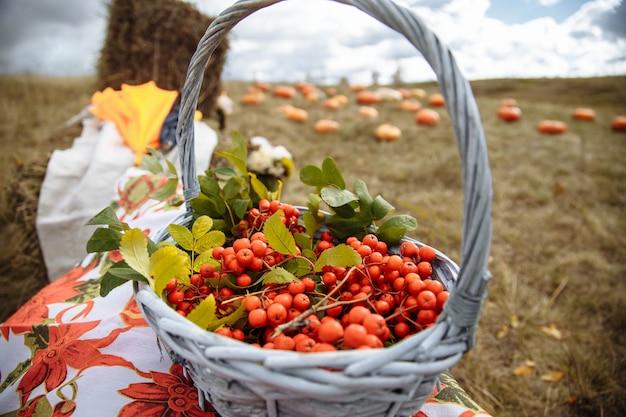 Bacche rosse in un cesto in un campo. raccolto autunnale Foto Premium