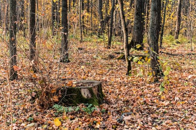 Bakdrop del fondo di struttura delle foglie della foresta del ceppo Foto Premium