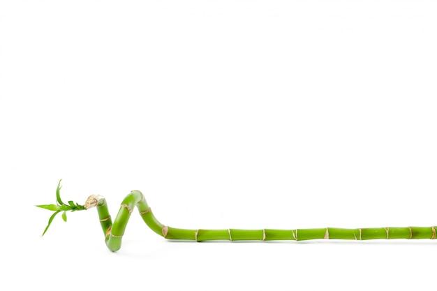 Bambù verde fortunato Foto Premium