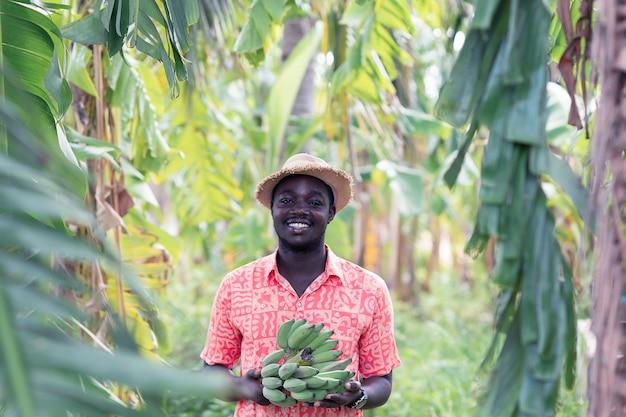 Banana africana della tenuta dell'agricoltore all'azienda agricola biologica Foto Premium