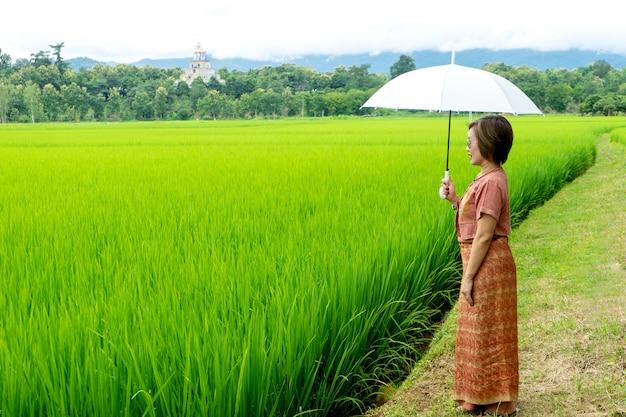 Basamento tailandese della donna nel giacimento verde del riso, Foto Premium