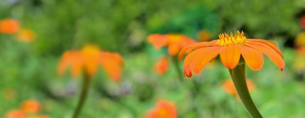 Bei fiori arancioni che fioriscono sul verde Foto Premium
