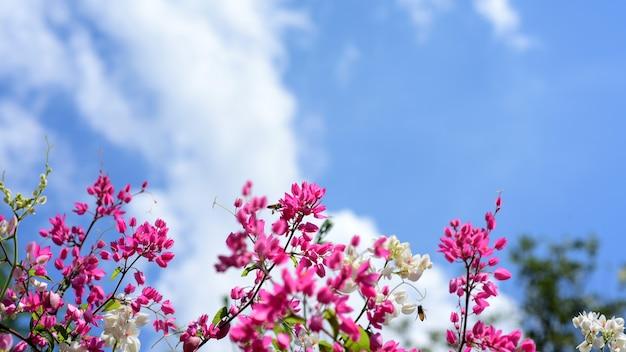 Bei fiori bianchi e rosa e belle foglie verdi nei giorni di sole Foto Premium