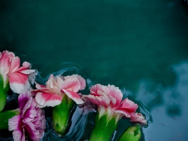 Bei garofani nella priorità bassa dell'acqua Foto Premium