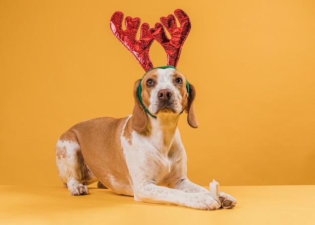 Bel cane che indossa le corna di renna Foto Gratuite
