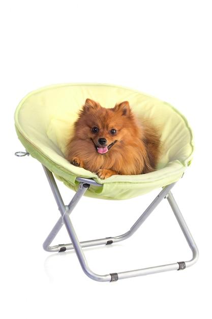 Bel cane color caramello Foto Premium