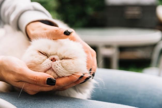 Bel gatto bianco a casa Foto Gratuite
