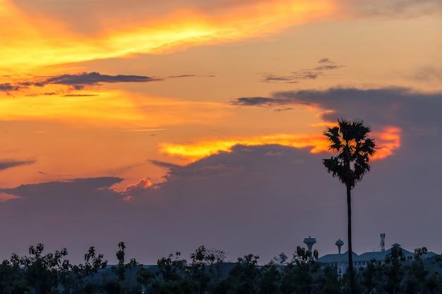 Bel tramonto con palme silhouette sul cielo al crepuscolo Foto Premium