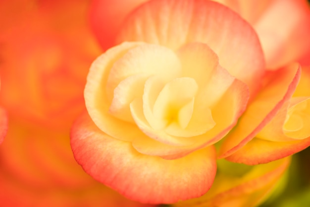 Bella brillante fioritura fresca Foto Gratuite