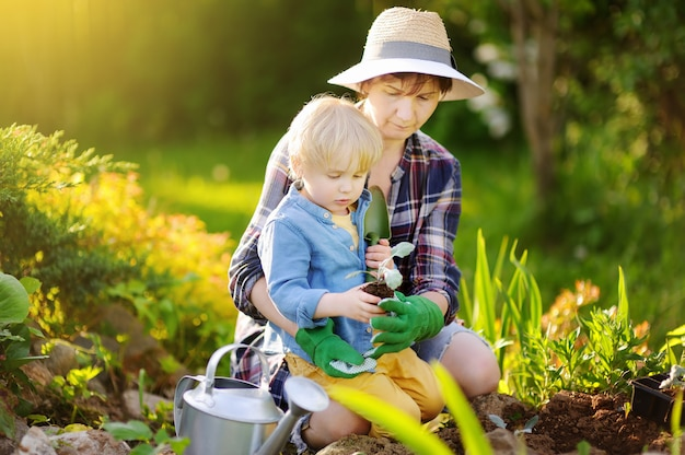 Bella donna e il suo figlio carino piantare piantine a letto nel giardino domestico al giorno di estate Foto Premium