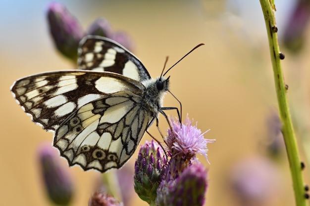 Bella farfalla colorata che si siede sul fiore in natura. giorno d'estate con il sole fuori sul prato. col Foto Gratuite