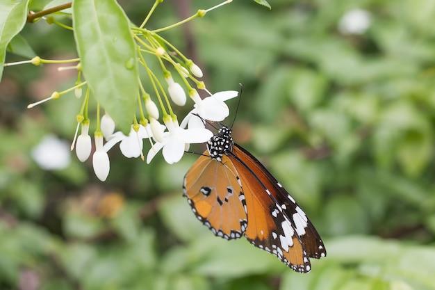 Bella farfalla selezionare messa a fuoco Foto Premium