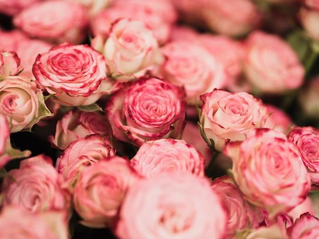 Bella fine del mazzo della rosa in su Foto Gratuite