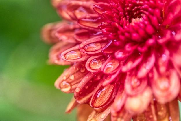 Bella floricoltura della dalia in un campo Foto Gratuite