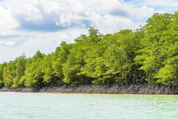 Bella foresta tropicale della mangrovia in tailandia Foto Gratuite