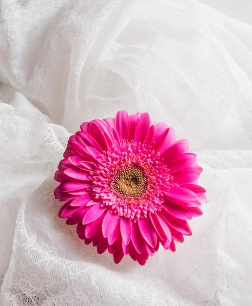 Bella fresca fioritura rosa brillante tra tessile bianco Foto Gratuite